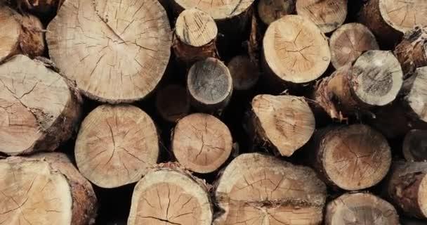 Borovice lesní protokolu kmeny poraženy protokolování osv ětlení. Forest web protokolování. kmeny pokácených stromů. 4k