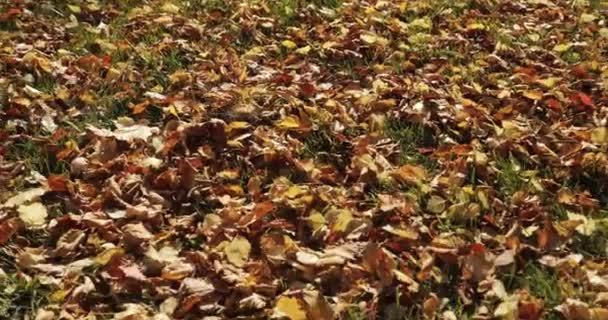 Herbstblätter fallen und die Sonne scheint durch Herbstblätter. schöne Landschaft Hintergrund.