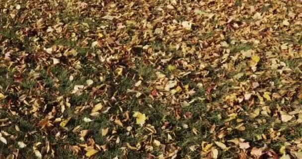 Podzimní listí padající a slunce svítí skrz listí na podzim. Krásné pozadí.