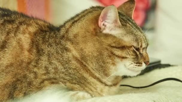 Szürke macska pihen az ágyon a lakásban.