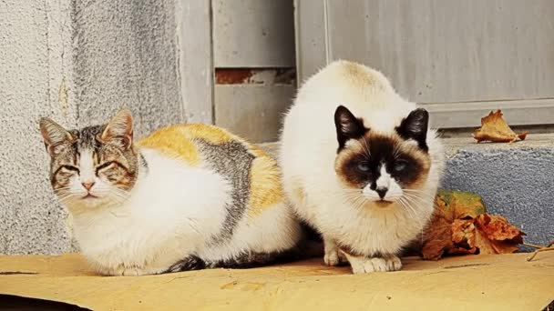 Two colorful motley cats sit on porch of house.