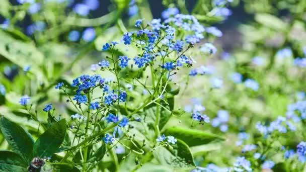 Pomněnka je rod kvetoucích rostlin v rodině Boraginaceae. Na severní polokouli se běžně nazývá pomněnky nebo scorpion trávy
