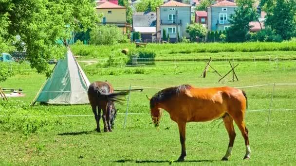 Dva koně se pasou v pastviny v létě