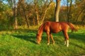 Horse on the green grass, autumn landscape