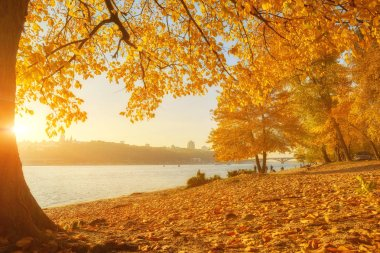 Autumn trees near the river, leaves on sand. Landscape in sunny day stock vector