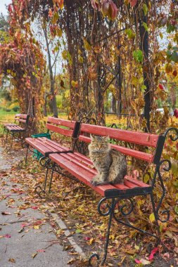 lonely tabby cat is sitting on the bench outside