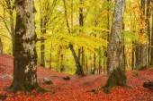 Krajina pěkný fantasy Forest s potok zlatý podzim. Myšlenka plakát