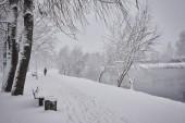 Fotografie Winter, Wald, Schnee. Verschneiten Kiefernwald, Bäume im Schnee, eine wunderschöne Winterlandschaft, Natur