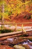 dřevěný most přes potok v podzimním lese