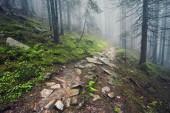Lesní cestou přes hustými lesy, lehkou mlhu a kapradí linie