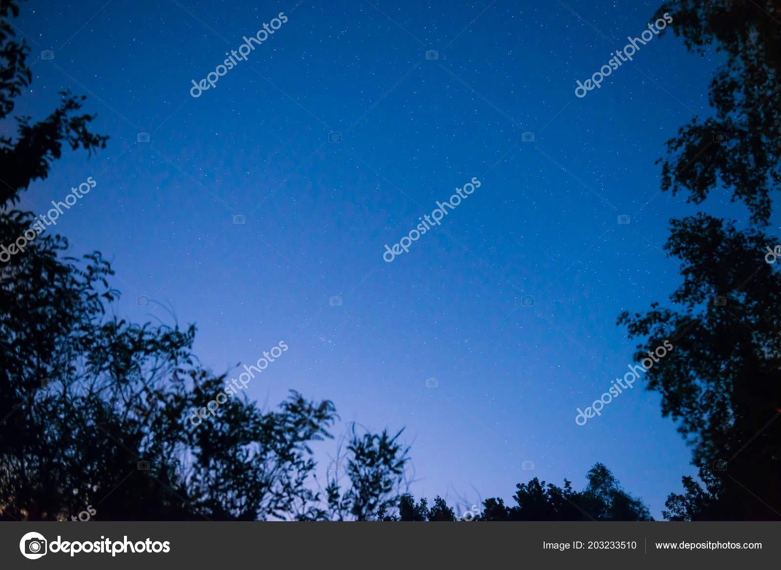 really cheap on wholesale biggest discount Coucher Soleil Nuit Sombre Ciel Bleu Dans Forêt Avec Des ...