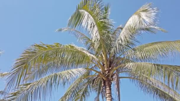 Coconut palm trees on a wind at tropical beach.