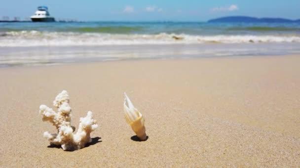 weiße Korallen und Muscheln am Sandstrand