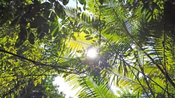 Luce del sole che passa attraverso foglie verdi nella foresta della giungla
