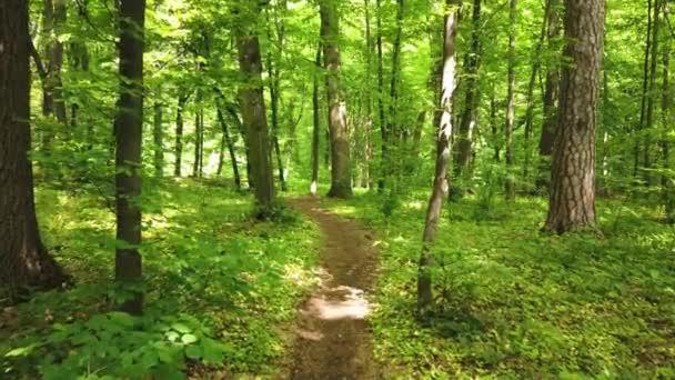 Aussichtsreicher Blick auf den Pfad im grünen Wald