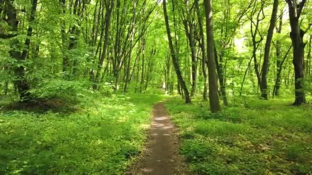 Zelený les s pěšou, stromy a sluncem procházející listy, 4k klip