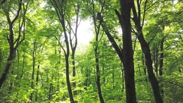 Zelený Les se stromy a sluncem, procházející listím, 4k klip