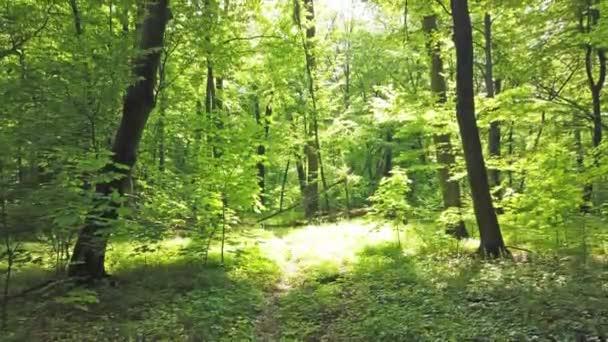 4k Clip von grünem Wald mit Bäumen und Sonnenlicht, das durch Blätter geht