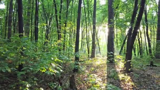 Les se stromy, pěšinu a sluncem