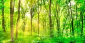 Panorama zelené lesní krajiny se stromy a slunečním světlem procházející listy