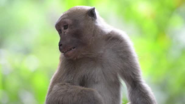 wilder Affe sitzt in einem Baum im grünen tropischen Wald mit Bäumen