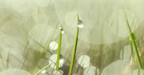 kapky vody na trávu