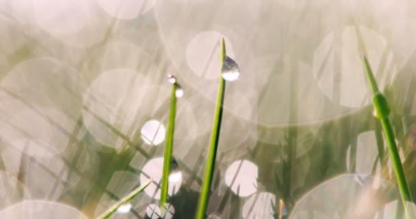 nasses Gras mit Regentropfen