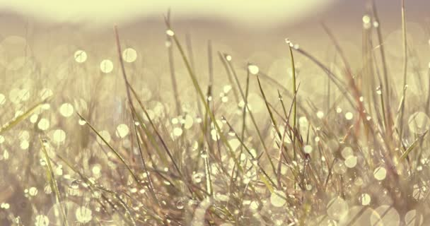 Slunečný den s rosou