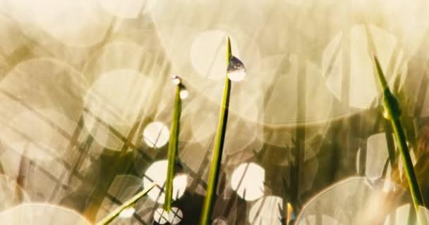 Lesklý mokrý trávník na podzim