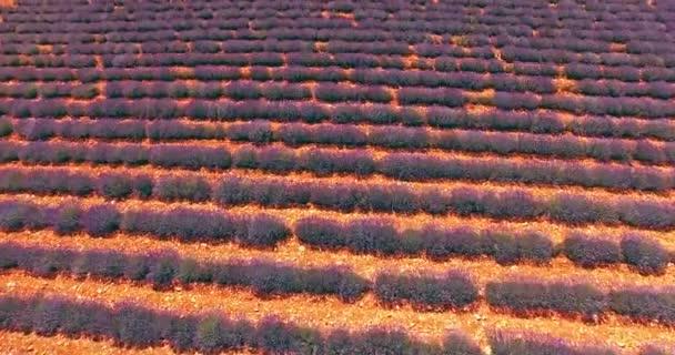 Rural landscape with lavender field