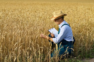 Farmer with clipboard inspecting crops at wheat field