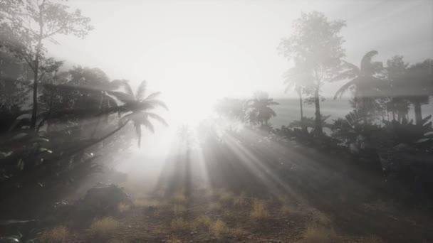 4 k úžasný západ slunce na tropické palmy krajina s palmami