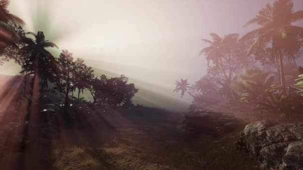4k Amazing sunset at tropical palms landscape with palm trees