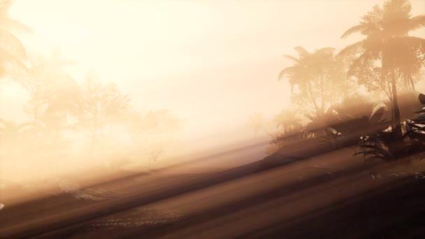 4 k úžasný západ slunce na tropické palmy krajina s palmami. Cestování krajinou a destinace