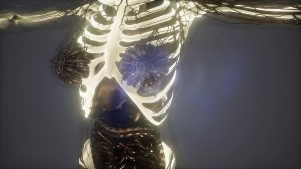 Anatomía Ciencia Del Cuerpo Humano Rayos Con Esqueletos Huesos ...