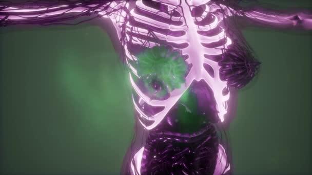 ♕ SPIRIT BRINGERS: EMPYREAN REALM. (SAGA DE BYNQUISTERR) - Página 21 Depositphotos_214315394-stock-video-science-anatomy-of-human-body
