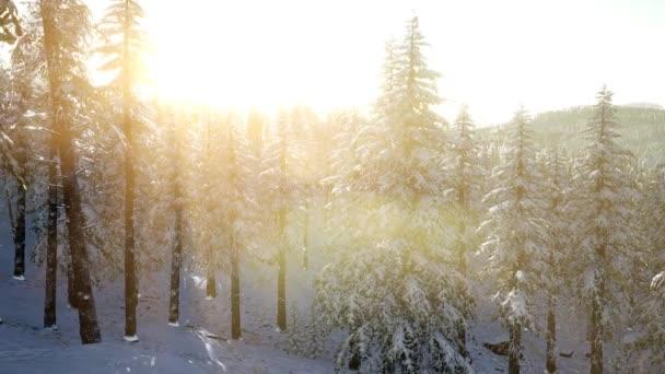 4 k letecké zasněžené stromy Drone záběry krajiny zimní