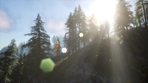 Slunce prosvítající borovic v horském lese