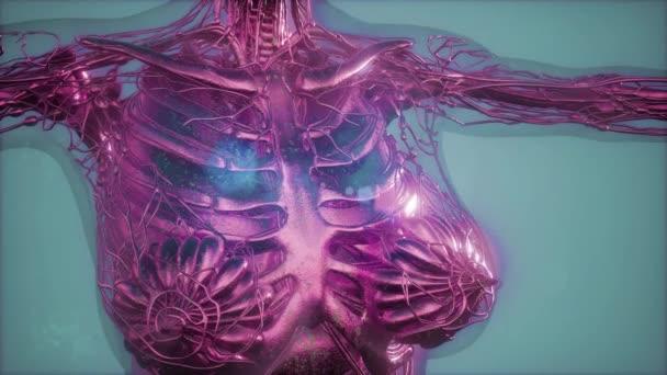 Mammographie Radio Imaging für Brustkrebs-Diagnose