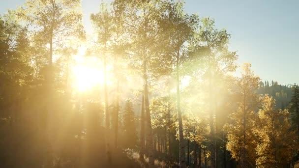 Sonne scheint durch Kiefern im Bergwald