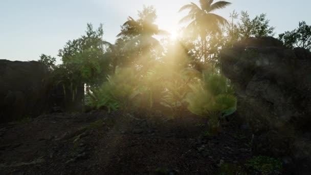 Sluneční paprsky světla pronikající hustým svěží zelený baldachýn