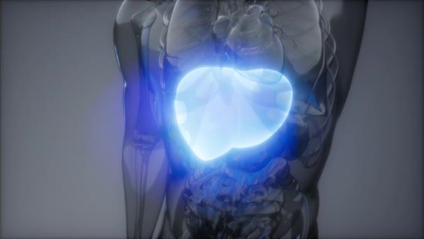 Zkouška lidské jaterní radiologie