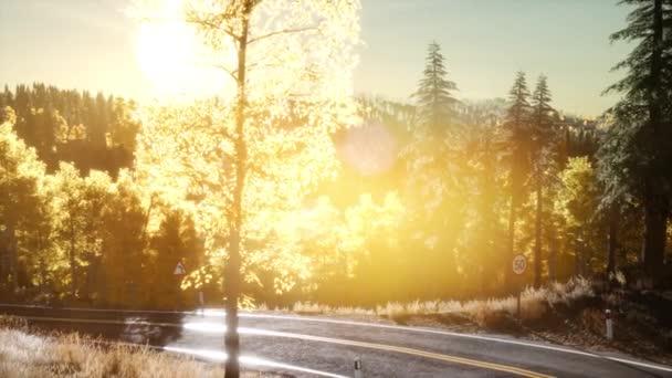 Les za východu slunce paprsky