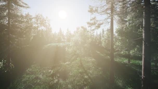 Zdravé zelené stromy v lese