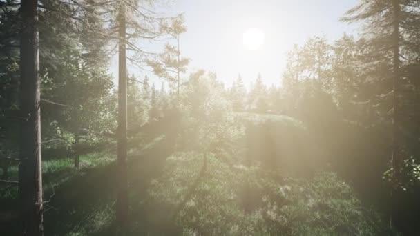 gesunde grüne Bäume im Wald