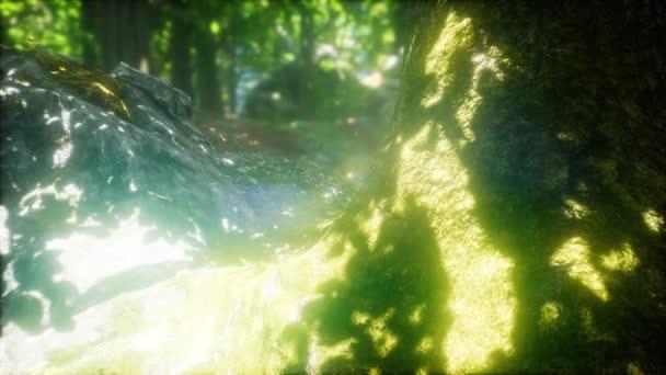 Sluneční paprsky zářící skrze přírodní buk lesní stromy