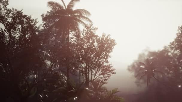 Palma tropicale della foresta pluviale in nebbia
