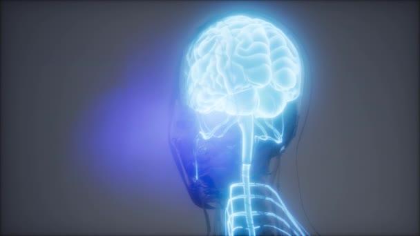 Lidský mozek radiologie zkouška