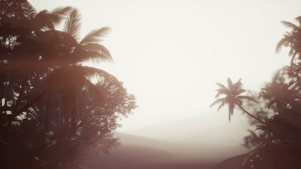 tropischer Palmenregenwald im Nebel