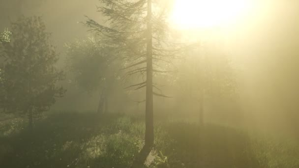 Kouzelný les s Sparkles
